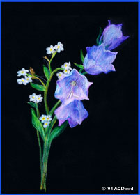 drawing of bluebells