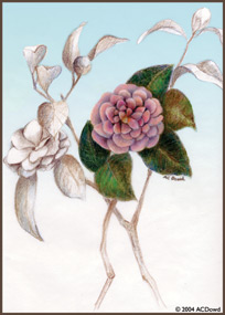 drawing of pink camelias