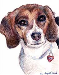 prismacolor drawing of a Beagle