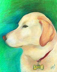 prismacolor drawing of a yellow lab dog