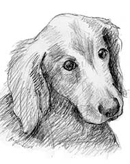 pencil drawing of a Golden Retriever dog