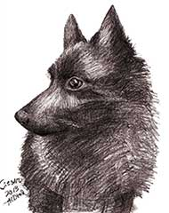 pencil drawing of a black dog