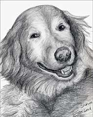 pencil drawing of a golden retriever smiling