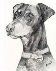 pencil drawing of a doberman pincier with floppy ears