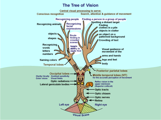 Tree of Vision diagram